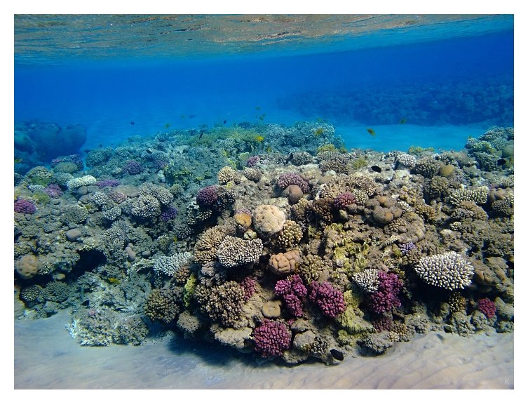Reef in shallow water