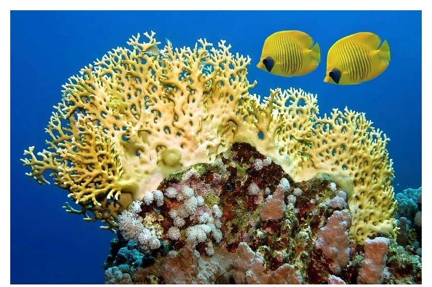 Butterflyfish and the reef